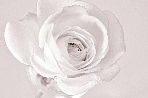 Weiße Rose: Widerstandsgruppe von Hans & Sophie Scholl